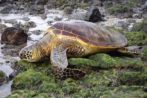 Hawaii For The Vagabond Naturalist post image