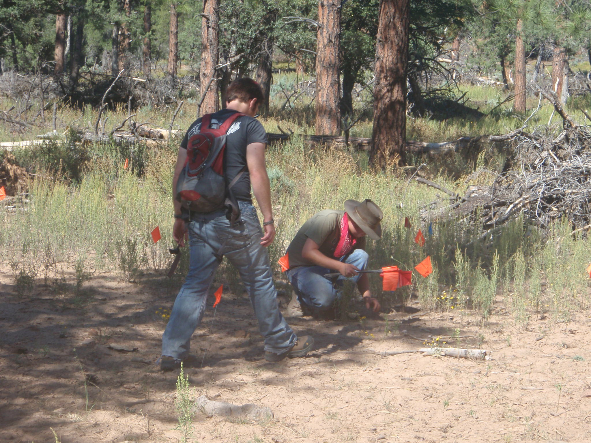Archaeologists finding a prehistoric site in the tonto forest of