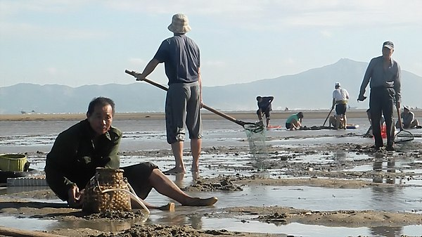 clam fishing in china (3)
