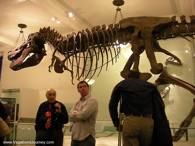 Where To Enter Museum Of Natural History Nyc