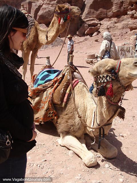 pregnant traveler