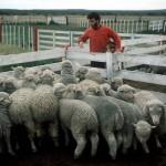 Farm work in Argentina