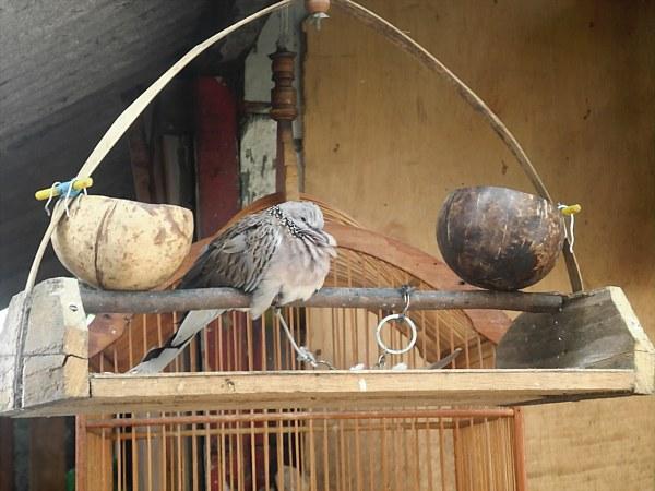Exotic birds in Jakarta