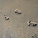Baby Footprints Sand
