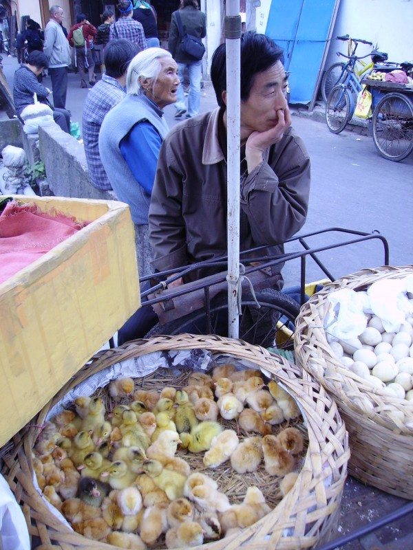 chicken seller china