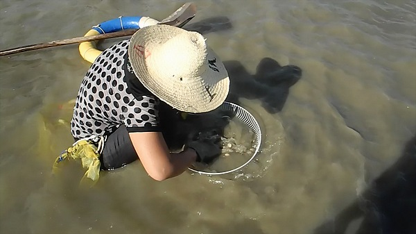 china clam fishing