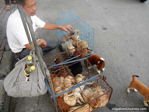 China puppy seller