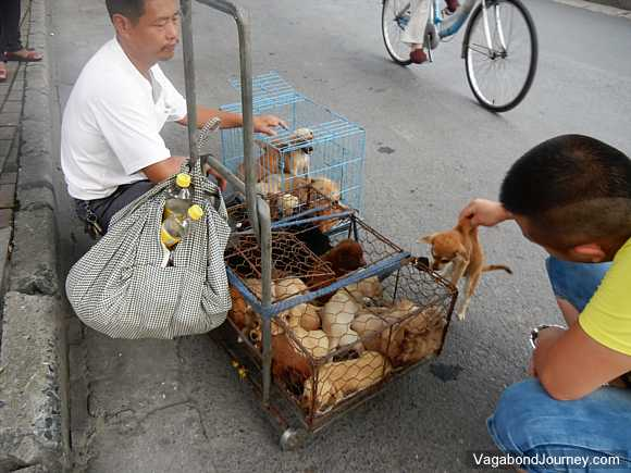 Chinese puppy seller