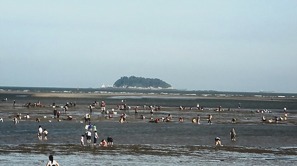 clam fishing in China (5)