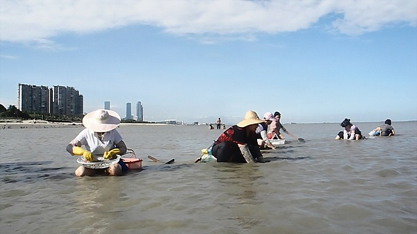 clam fishing in china