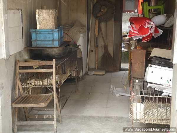 No birds here: another poultry market is closed down in China