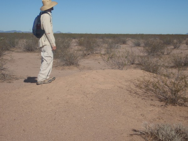 Archaeologist in the Sonoran desert