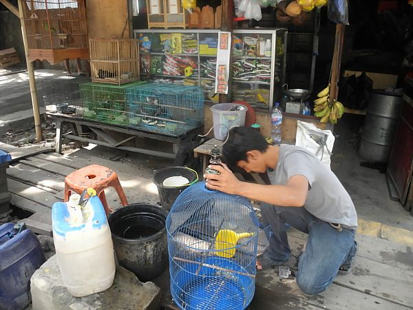 exotic bird seller Jakarta