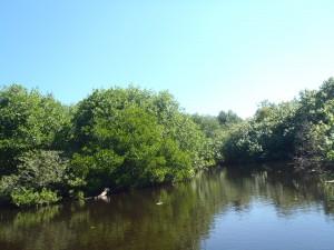 lagoon and mangroves at Ventanilla