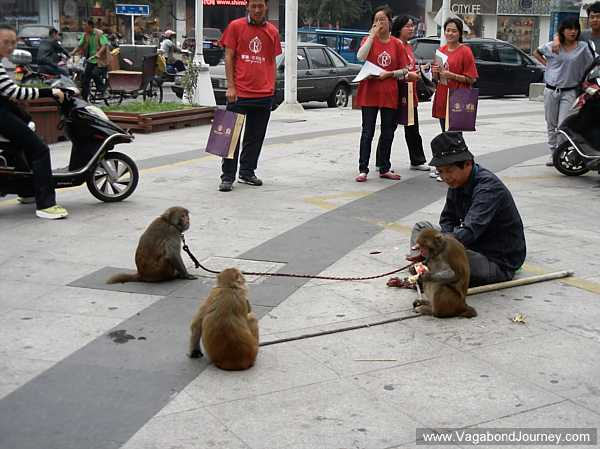 Monkey Street Shows in China post image