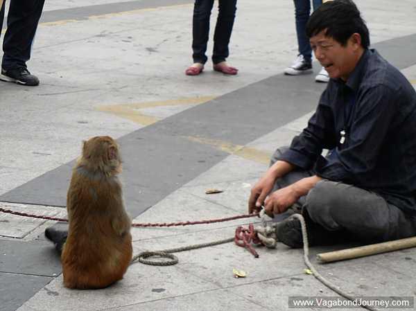 Street performer with monkeys