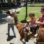 Petra Shepard Riding Llama