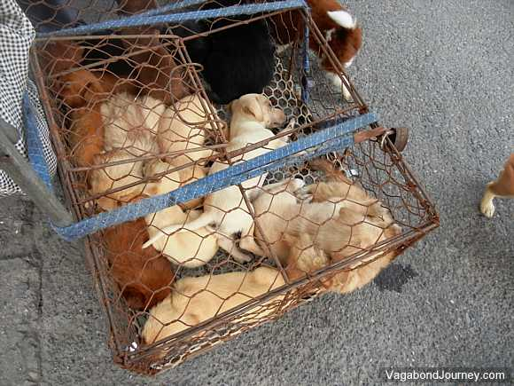 puppies in a cage