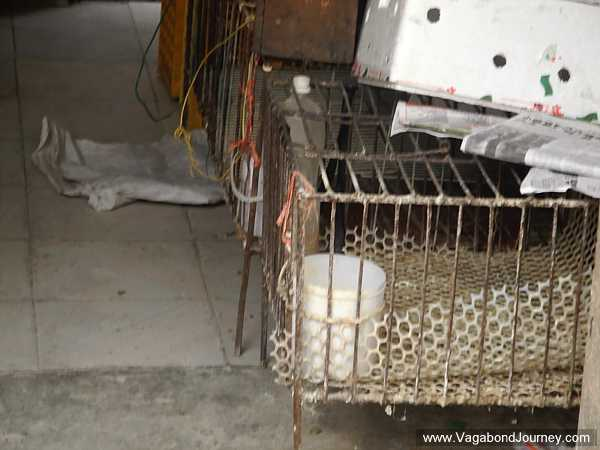 Empty cages at a shut down poultry market in Jiangsu province of China