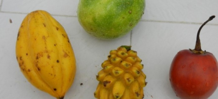 South American Fruit