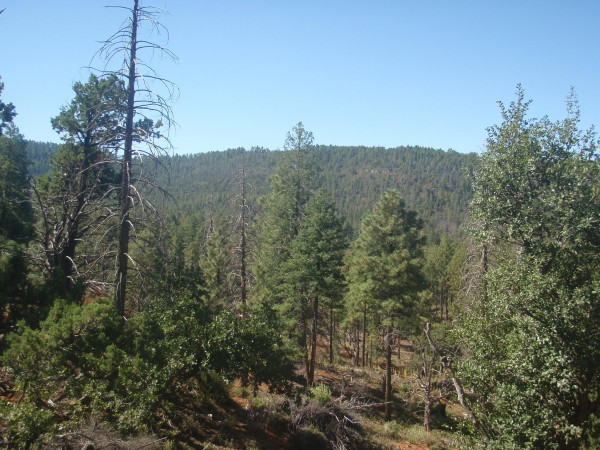 Tonto National Forest Arizona