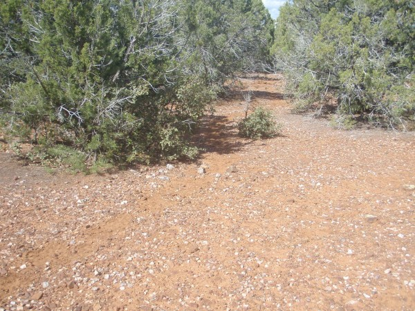 Vegetation in Tonto Forest