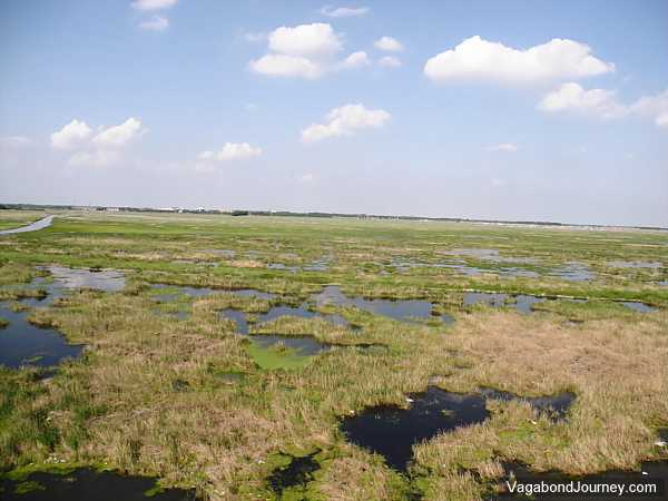 Wetlands near Daqing.