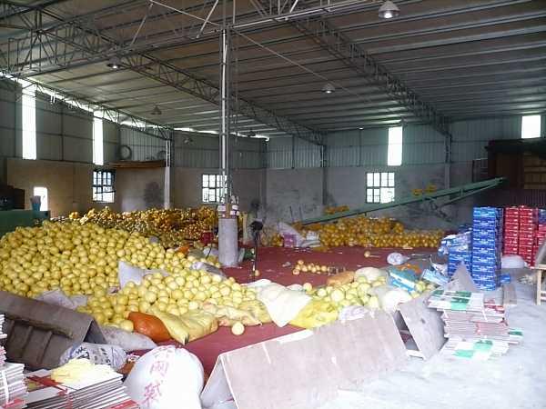 Xiamen pomeloes